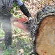 lumberjack cutting up tree
