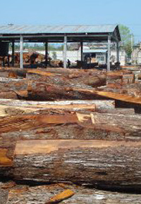 Logging Mahogany