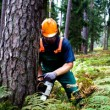 Is Lumber Sustainable?