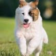 How to Stop Puppy Nipping and Biting
