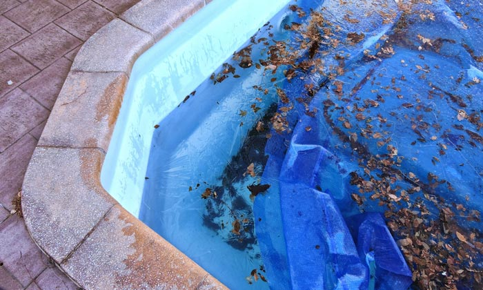 leaves cluttering pool water