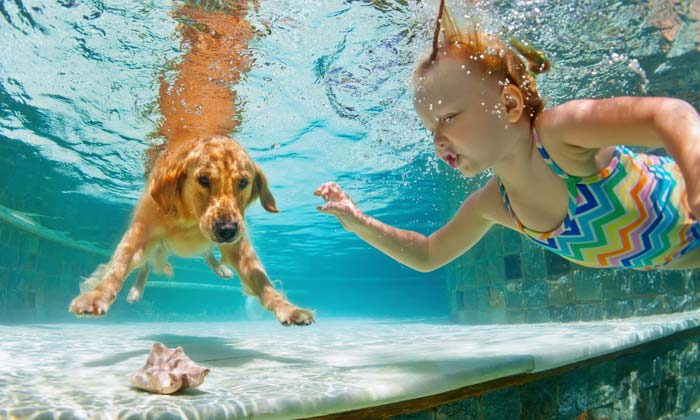 dog and young girl underwater searching for seashell